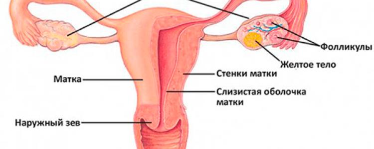 УЗИ после родов: какое и как делают, когда лучше — в роддоме, через месяц, норма размеров матки