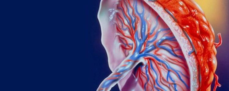 Плацента человека: что это, как она выглядит, её строение, структура и функции, что такое послед и детское место